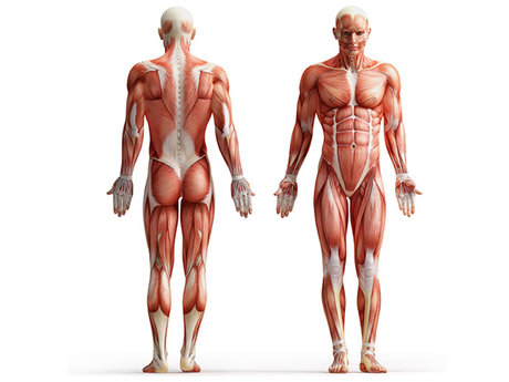 Posture Correction Program