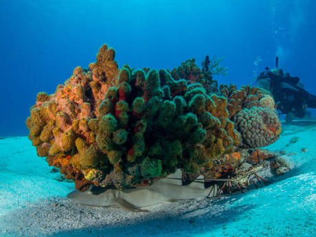 50 min Underwater Photo Review