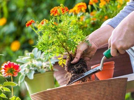 Planting Your Garden