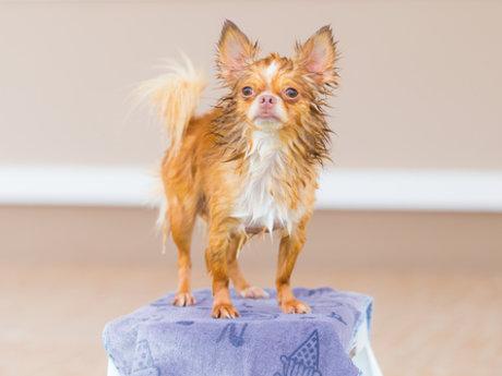 30 min Canine psychology consultati