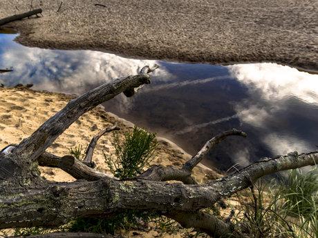 Fallen tree sand dunes summer sky