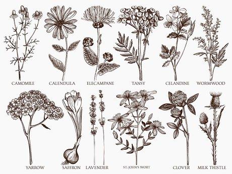 Herbal knowledge