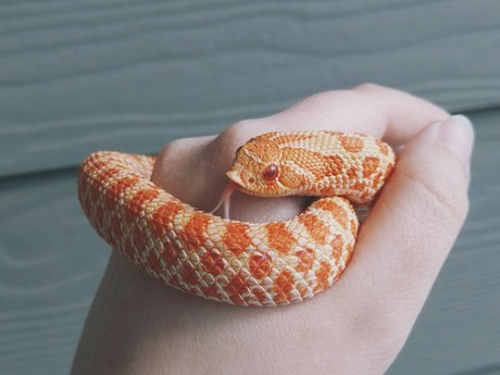 Snake Care Advice