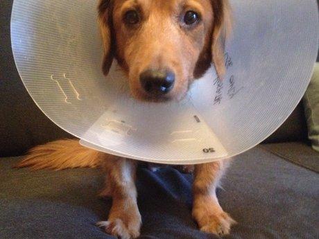 Cat or dog veterinary advice