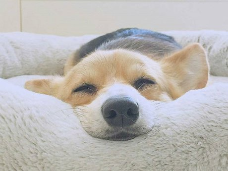 Dog Massage: 1/2 Hour