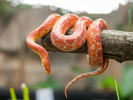 Snake Advice