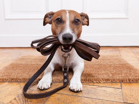 Pet consultant or pet sitter
