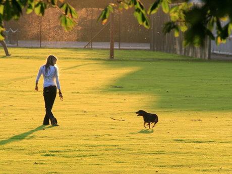 Email Dog Training Help